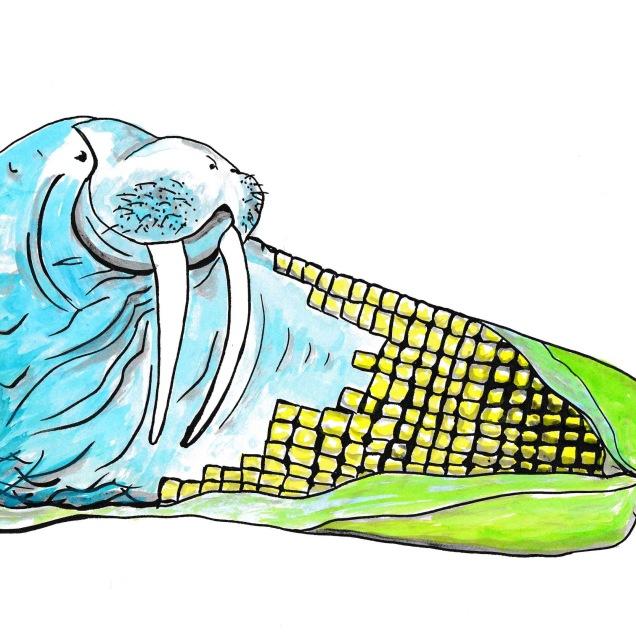 walrus corn